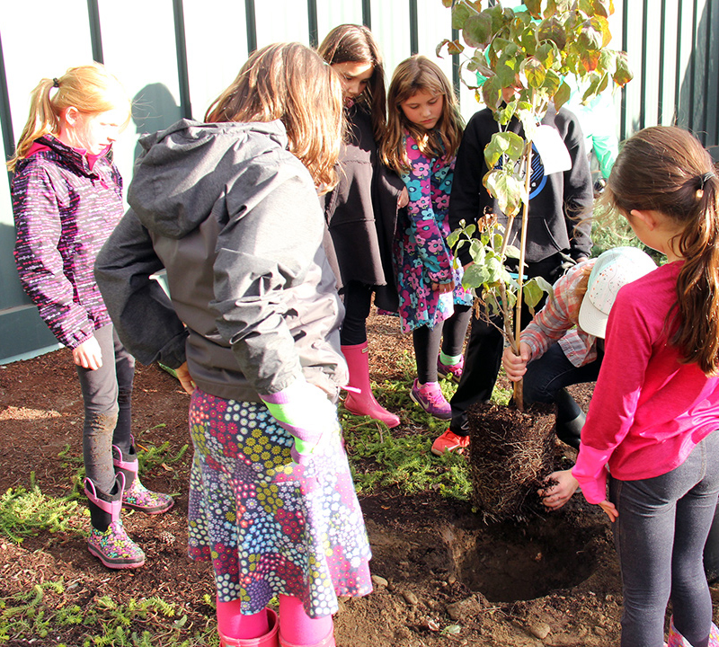 Bell students plant a tree