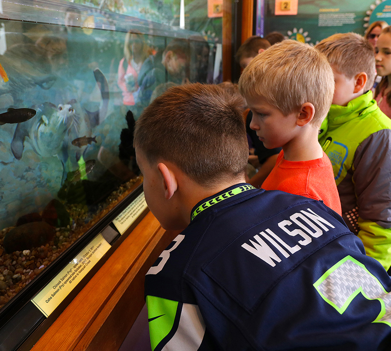 Before the journey begins – students learn about life cycles at the Issaquah Salmon Hatchery