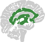 Brain icon with part of it shaded green